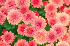 New free stock photo of flowers summer garden via Pexels https://www.pexels.com/photo/nature-flowers-summer-garden-47360/