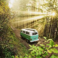 Road trip >> Woods << Wanderlust