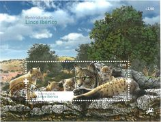 """""""The Iberian lynx is the world's most endangered feline species. There are real fears that it may soon become the first cat species to become extinct for at least 2,000 years."""" http://www.kollectbox.com/explore/  #stamps   #postagestamps   #philately   #collectors   #collectables   #Iberian   #Lynx   #buy   #sell   #trade   #exchange   #swap   #startup   #tech   #hobby   #ecommerce"""