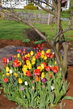 Quick & Easy Trench Planting For Fall Bulbs - Tulpen Plants, Garden Plants Design, Plant Design, Tulips Garden, Fall Bulbs, Planting Bulbs, Fall Bulb Planting, Planting Tulips, Bulbs Garden Design