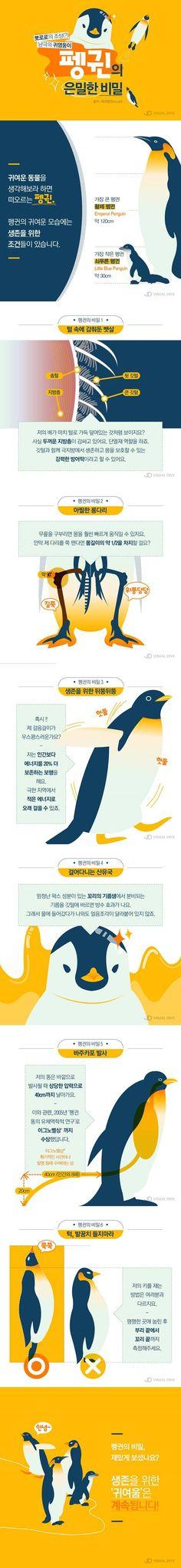 귀여움의 대명사 '펭귄', 생존 위한 이들의 숨겨진 비밀은? [인포그래픽] #Penguin / #infograhpic ⓒ 비주얼다이브 무단 복사·전재·재배포 금지