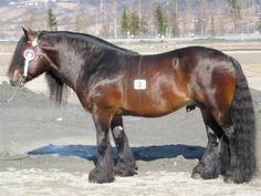 Dølehest - stallion Smedsmo Lindar