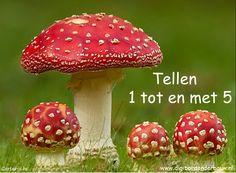 Digibordles paddestoelen tellen 1 t.m 5. http://www.digibordonderbouw.nl/index.php/themas/herfst/paddestoelen/viewcategory/171-paddestoelen-digibordlessen