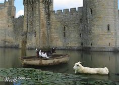 A goat in a moat. Goat in a boat in a moat. ;)