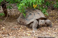 How to Select a Galapagos Cruise Boat