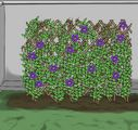 6 Ways to Propagate Azaleas - wikiHow