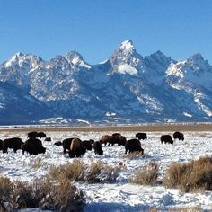 Wyoming - most rustic, friendly and absolutely gorgeous. Everyone should include it in their U.S.A.-trip!