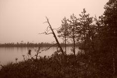 Шабаш ведьм или первая гусиная охота.   Отчеты об охоте   Блоги   Охота без границ. Питерский Охотник. Сайт для всех любителей охоты и рыбалки