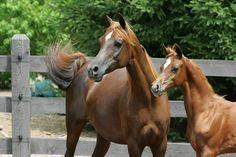 Arabian | Flickr - Photo Sharing!