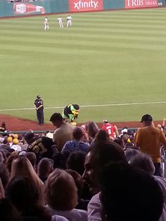 Pittsburgh Pirate parrot !