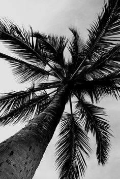 "Image of ""Black and White Palm"" Fine Art Photography"