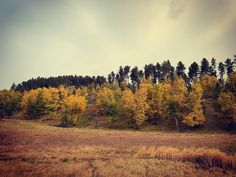 Custer State Park. #custerstatepark #southdakota #dakota #sd #travel #travelphotography #landscape #lanscapephotography