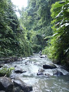 Martinique Rainforest.  it is an overseas region of France, consisting of a single overseas department.