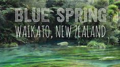 Waikato's Blue Spring Walk - Travelling K New Zealand Houses, Blue Springs, South Island, Travel Bugs, Auckland, South America, Morocco, Norway, Spain