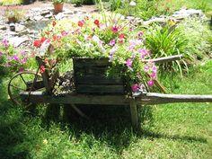 Wheelbarrow with Flowers | Wheelbarrow with flowers . . .