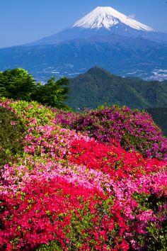 五月晴れ Mt. Fuji, Japan