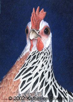 Chicken art, colored pencil Silver Phoenix hen drawing -excellent detail from an artist an avian scientist! Chicken Tattoo, Chicken Drawing, Chicken Art, Animal Paintings, Animal Drawings, Huhn Tattoo, Kunst Portfolio, Chicken Pictures, Wings Drawing