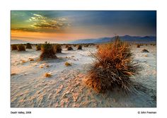 Devil's Cornfield, Death Valley National Park, California. Photo by John Freeman.