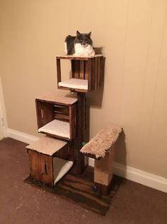 Resultado de imagem para diy cat bookshelf climbing ramp