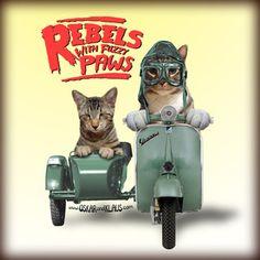 oskar and klaus cat ties   Sweet Pandemonium: The Top 5 Internet Cats. Meow!