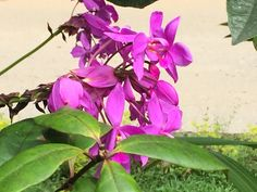 Orchids from the tropics