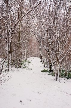 Stopping by woods on a snowy evening...