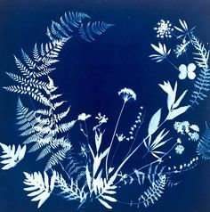 Sun Painting, Texture Painting, Linda Ronstadt, Spring Window Display, Sun Prints, Nature Sketch, Cyanotype, Photo Projects, Linocut Prints