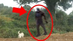 In this Top 5 countdown of SCARY THINGS, we take a look at the scariest sightings of Bigfoot (aka the Sasquatch) caught on camera and witnessed in real life. A video investigation into scary,… Huffing Post Paranormal, Bigfoot Photos, Real Bigfoot Pictures, Alien Abduction Stories, Scary News, Pie Grande, Haunted Objects, Bigfoot Sightings, Scary Gif