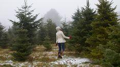 Re-use Christmas trees