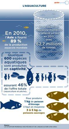 L'aquaculture en chiffres : http://future.arte.tv/fr/surpeche#article-anchor-10311