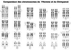CHROMOSOMES HOMME SINGE NB.jpg