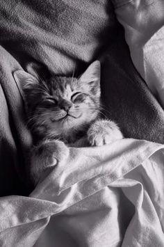 Cute #kittie