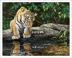 8 x 10 Giclee Print  Wildlife Art  Tiger by SwiftwingsStudio, $20.00