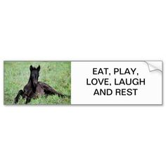 Baby foal lying in the meadow - eat, play, laugh and rest