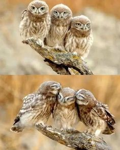 Lovely Owls – Beautiful. Reminds me of the owl babies book.