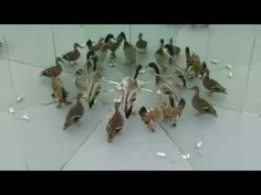 Animal Mirror Fun - YouTube. Wow one of the craziest things I've ever seen! Animals feelig like they are hallucinating. Humans also feeling like they are hallucinating !