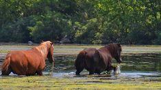 Moldova, Romania, Montana, Wildlife, Horses, Travel, Animals, Geography, Flathead Lake Montana
