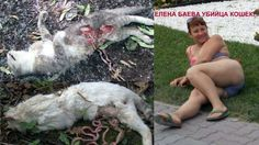 TAKE ACTION AGAINST SADISTIC ELENA BAYEVA ! SHE ORDER THEIR DOGS TO ATTACK AND KILL STRAY CATS AND HER NEIGHBORS'S PETS ! https://www.change.org/p/%D0%BF%D1%80%D0%B8%D0%BC%D0%B8%D1%82%D0%B5-%D0%BF%D1%80%D0%B0%D0%B2%D0%BE%D0%B2%D1%8B%D0%B5-%D0%BC%D0%B5%D1%80%D1%8B-%D0%BA-%D1%81%D0%B0%D0%B4%D0%B8%D1%81%D1%82%D0%BA%D0%B5-%D0%B8-%D0%BC%D0%BE%D1%88%D0%B5%D0%BD%D0%BD%D0%B8%D1%86%D0%B5-%D0%B1%D0%B0%D0%B5%D0%B2%D0%BE%D0%B9-%D0%B5-%D0%B5