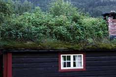 Sod roof. Yes, please.