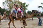 CAMEL PARK MAZOTOS - Camel Park Photos   Family Day out in Cyprus