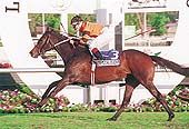 Crystal Clear (CHI) Winner of the 2002 Las Oaks (CHI-G1)