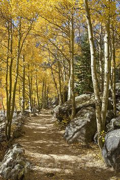 Colorado Images - Aspen Path, Rocky Mountain National Park, Colorado