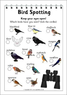 Bird spotter form (SB9235) - SparkleBox Bird spotting is a great excuse for a walk around Bosinver and the Cornish countryside. Educational, good exercise and a lot of fun. Can your child find all the birds here in Cornwall?