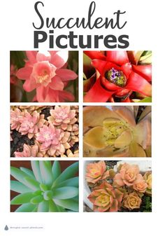 Learn how to take the best Succulent Pictures for record keeping and pest control.