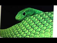 Cobra, benzimento dos antigos, não as mate