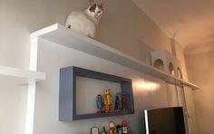 Confira projeto de móveis planejados para gatos - ProCompra - Orçamentos para os seus projetos