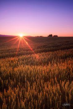 Wheat field by Shumon Saito on 500px