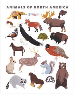 Image of North American Animals Print by Small Adventure
