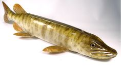 Image result for fish decoys