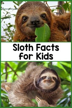 S-l-o-w down and read some amazing sloth facts for kids! They're the perfect topic for a homeschool science lesson, a preschool circle time, or to read before a visit to the zoo. Don't miss these interesting animal facts! Giraffe Facts For Kids, Animal Facts For Kids, Fun Facts About Sloths, Fun Facts About Animals, Science Experiments For Preschoolers, Preschool Science, Jungle Theme Activities, Interesting Animals, Circle Time